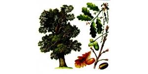 Полезные свойства деревьев.